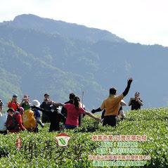 茶葉批發,茶葉供應商